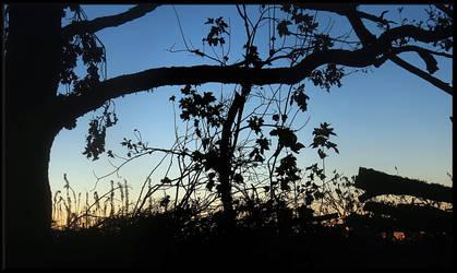 A beautiful evening... by Yancis