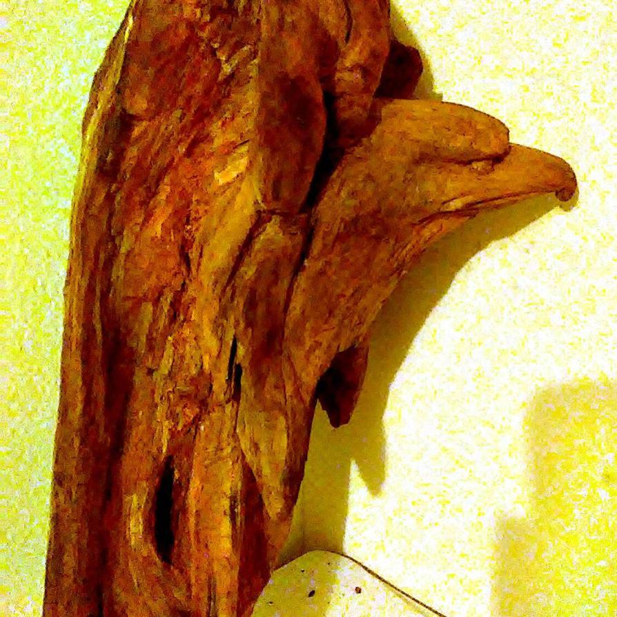 eagle of walnut  by donaldhoward58