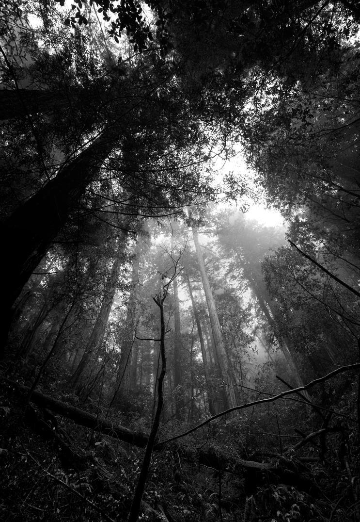 Muir-Woods by danielgregoire
