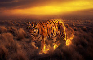 Tiger by Woodpecker300