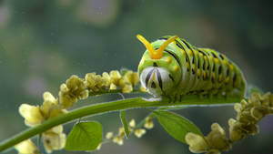 Catepillar in flowers