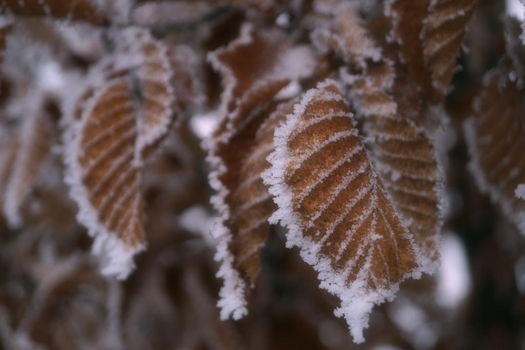 Blattfrost by Valeaves