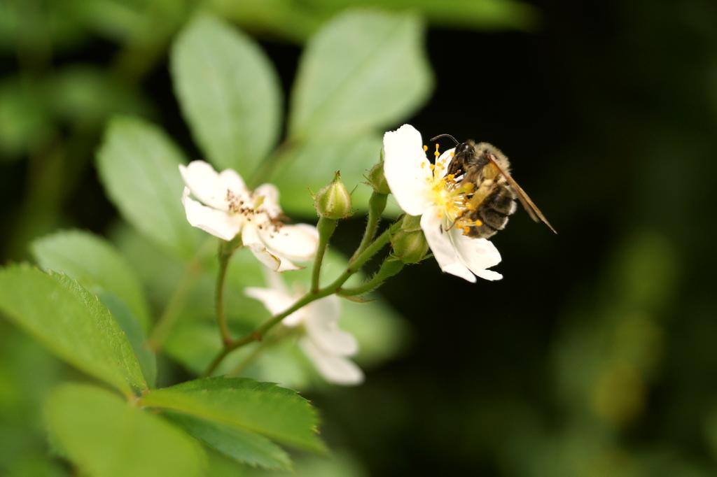 Bee 2 by Valeaves