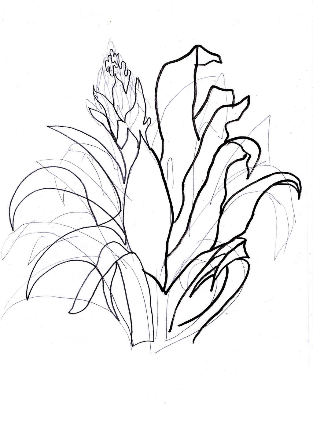 Continuous Line Drawing Of A Flower : Sketching and continuous line by kristina on deviantart