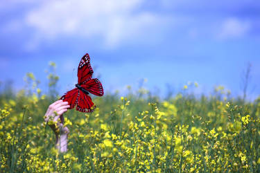 fly high, flutterby