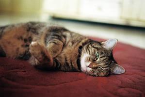 lazy days by Rona-Keller