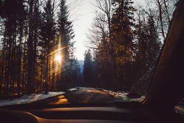 through forests filled with evening light by Rona-Keller