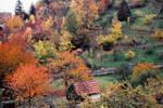 my first autumn in Stuttgart