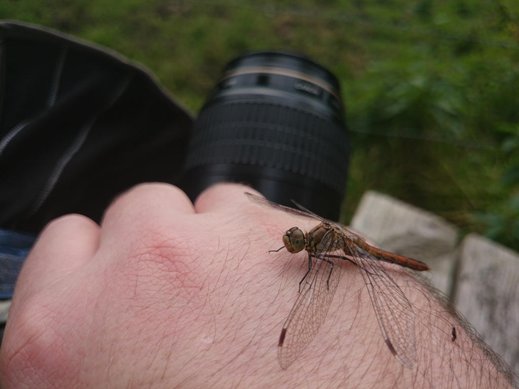 The problems of  a macro photographer by andabata