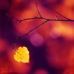 .:a silent song:.