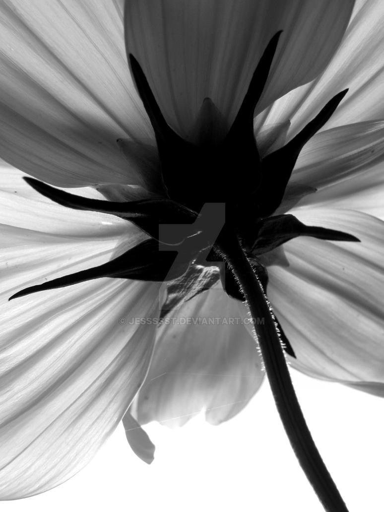 Black And White Flower By Jessssst On Deviantart