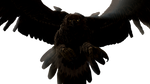 .:Dark Eagle:. by WrappedUpFrodo