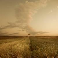 Golden silence by Alshain4