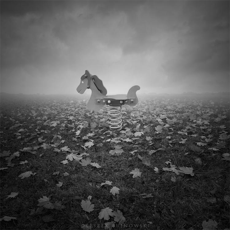 Wild horse by Alshain4