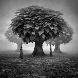 Forgotten woods. by Alshain4