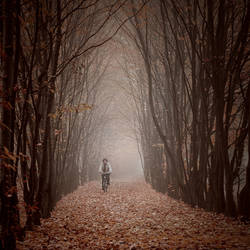 Cycling through the autumn by Alshain4