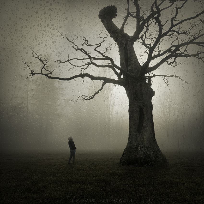 Last oak by Alshain4