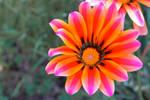 Rome Flower
