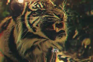Tiger v2 3D by sNakyGFX
