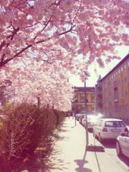 sakura trees III by yuya-yo