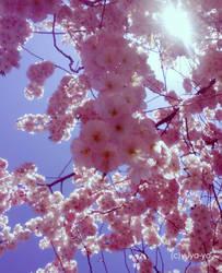 sakura trees IV by yuya-yo