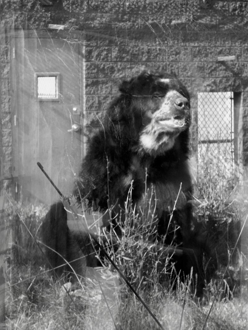 Big Scary Bear By Xstillexschreienx On Deviantart