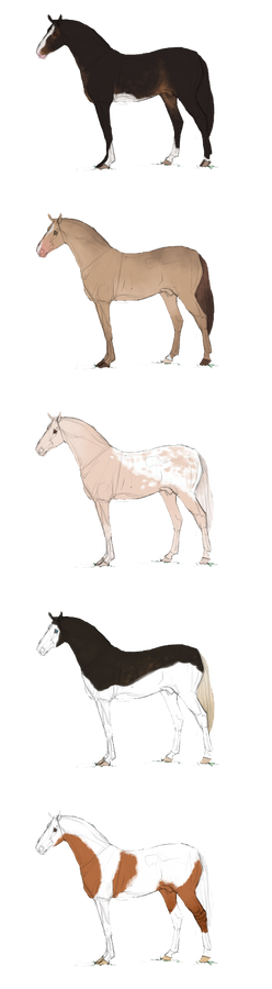 Horse Adopts - Art or Points ~