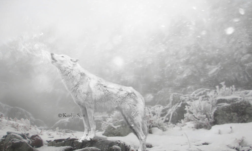The Howl of War by TheDreamBelow
