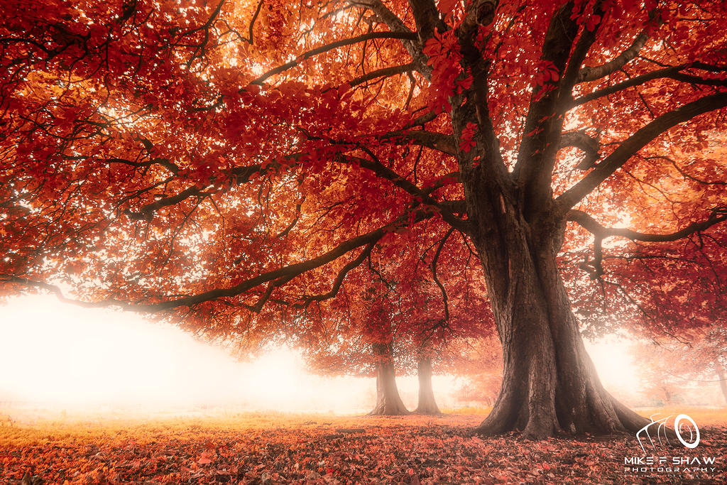 Mist Under The Red Canopy by MikeFShaw