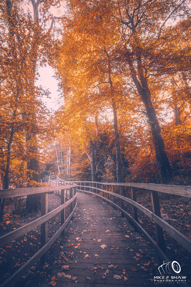 Come Take A Walk With Me by MikeFShaw