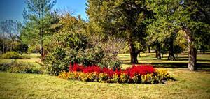 Flowers in Fall
