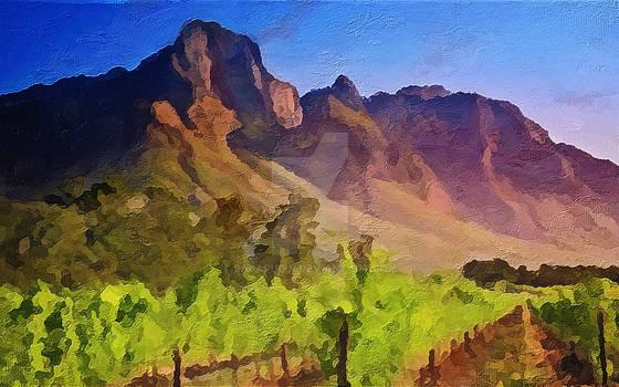 Vineyard in Franschhoek, South Africa
