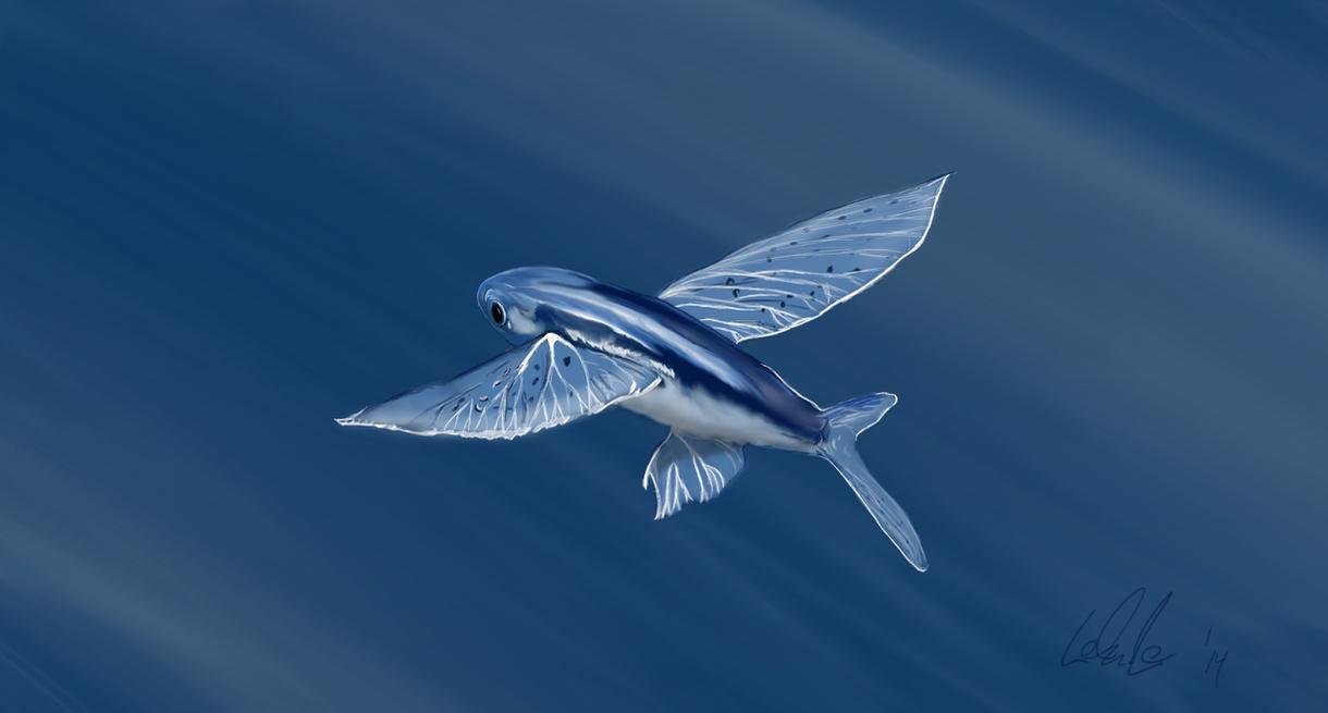 flying fish by cacodaemonia - photo #3