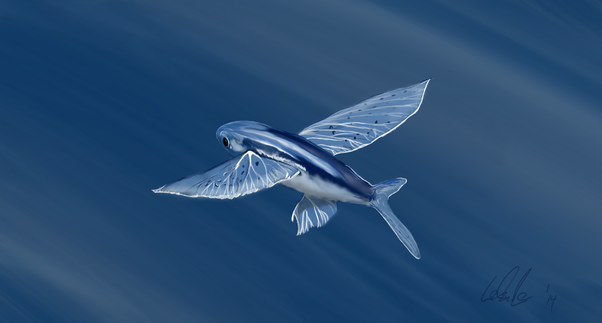 Malolo or flying fish by scoutmcball on deviantart for The flying fish