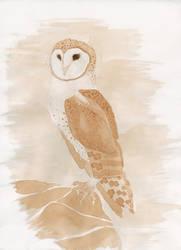 Barn Owl by cognink