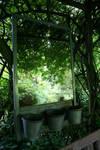 Reflet du jardin