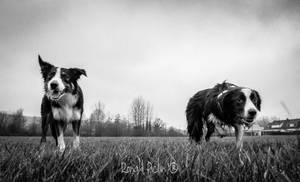 lucky et ilou by roon1305