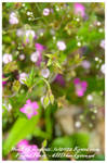Floral Faery W.I.P.