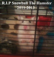 R.I.P Snowball the hamster by Londonexpofan