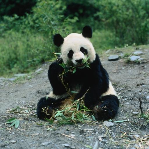 panda by photo-freak19