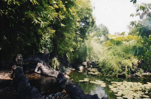 Jardin botanico unam by tavata on deviantart for Jardin botanico unam 2015