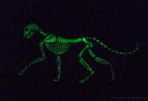 Glow in the Dark - X-Ray cat by CyanFox3