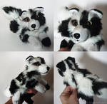 SOLD - Spotted Collie mix - small floppy