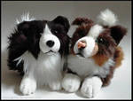 SOLD - Border Collies ~ Small floppy