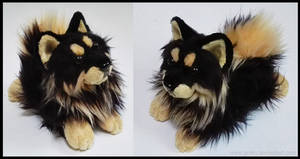 SOLD - BT Finnish Lapphund ~ Small floppy
