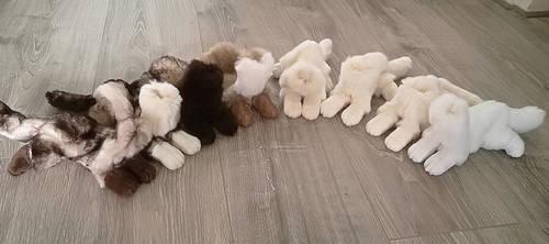 A set of Ferrets WIP by CyanFox3