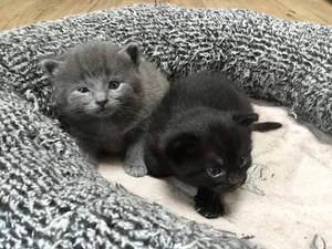 Kitten babies!