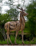 Driftwood Timorese Deer