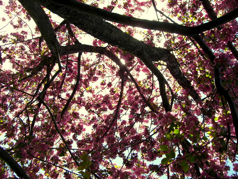 Sunkissed Petals by SongOfTheNightingale