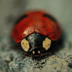 Ladybird by Bromelia94